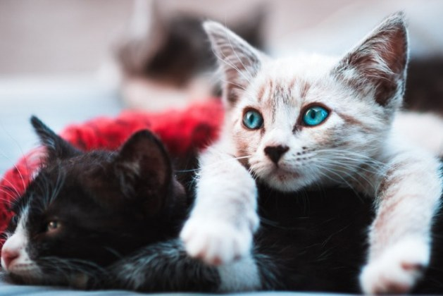 How To Help Your Cat Pass A Hairball?