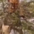Watch: Monkey Outwit the Tiger that Climbs Tree to Hunt Him, Netizens Laud the Primate's Wits
